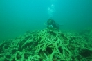 Dive Site F495 WWII Shipwreck